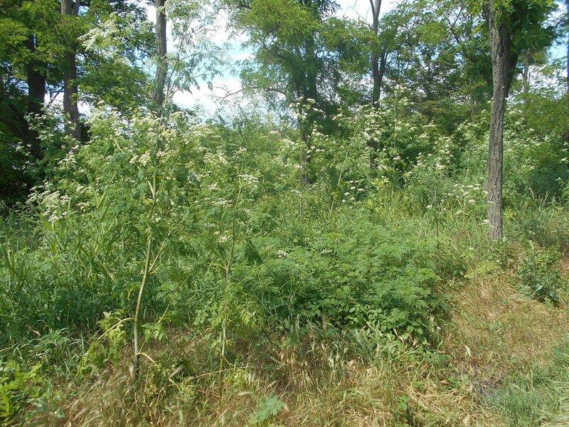В лесу ... DSCN2540.JPG