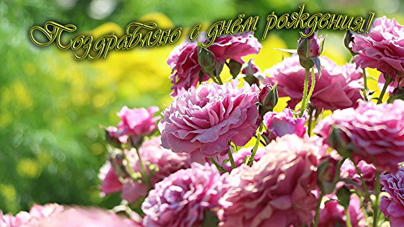 Поздравления с днём рождения Розы