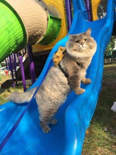 Фото кот бон бон