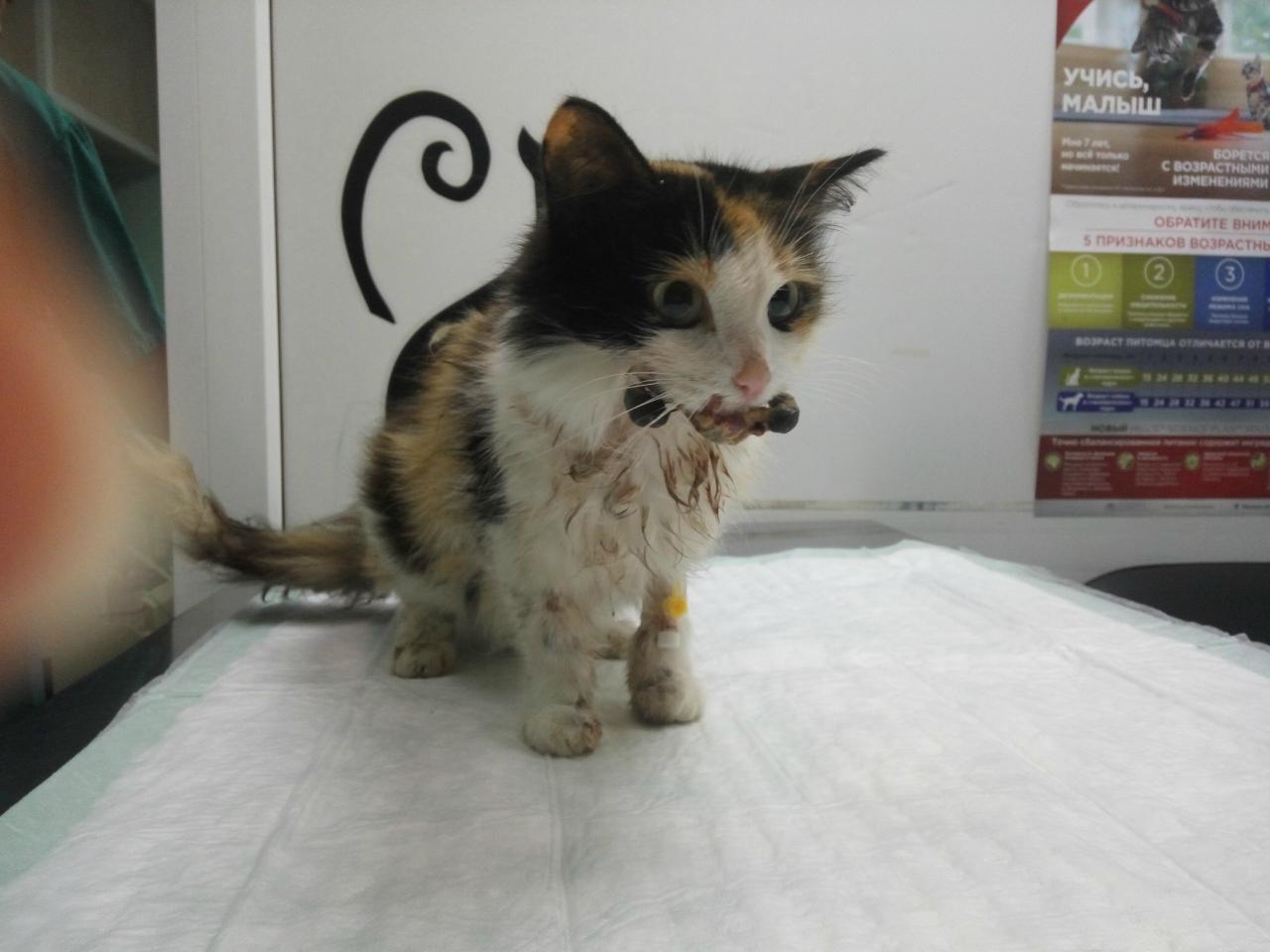 Maroosya Кошка Кристи с протезированной челюстью