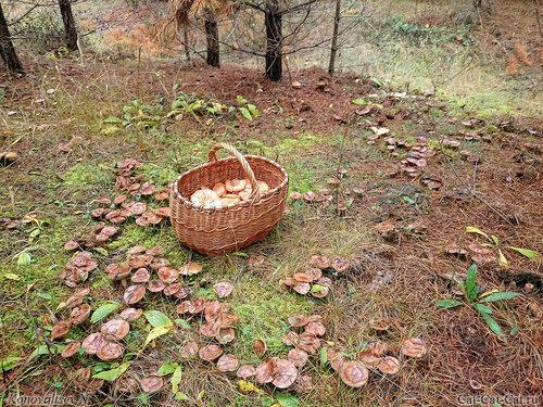 В лес по грибы