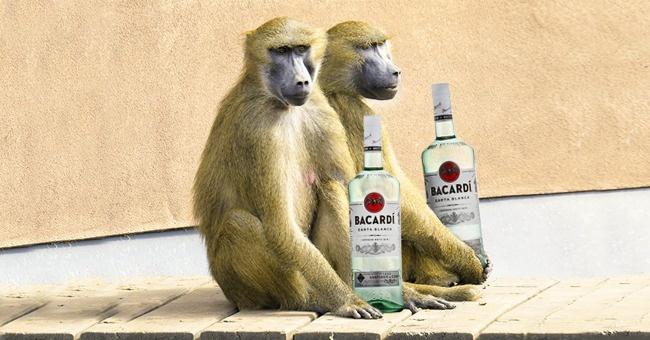 © wikipedia  Знаменитый бренд Bacardi сосвоим фруктовым напитком Pavian (что по-французски оз