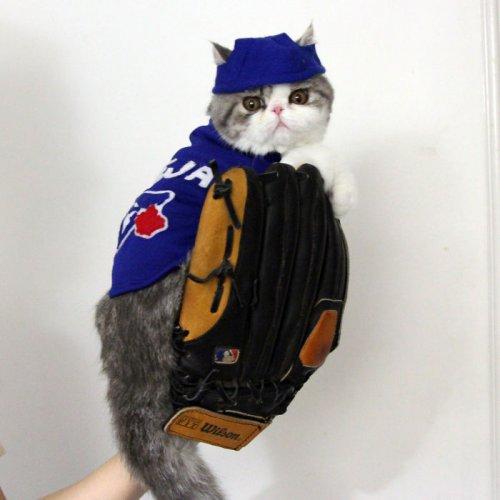 Кот-косплейщик Снупи и его друг Доби