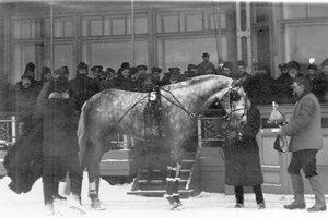 Орловский рысак Крепыш - победитель состязаний на Семеновском плацу.