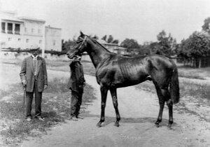 Лошадь Мамур, победитель Всероссийского дерби Е.И. и М.И. Лазаревых.