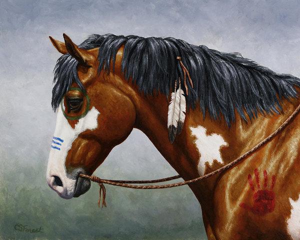 bay-native-american-war-horse-crista-forest.jpg