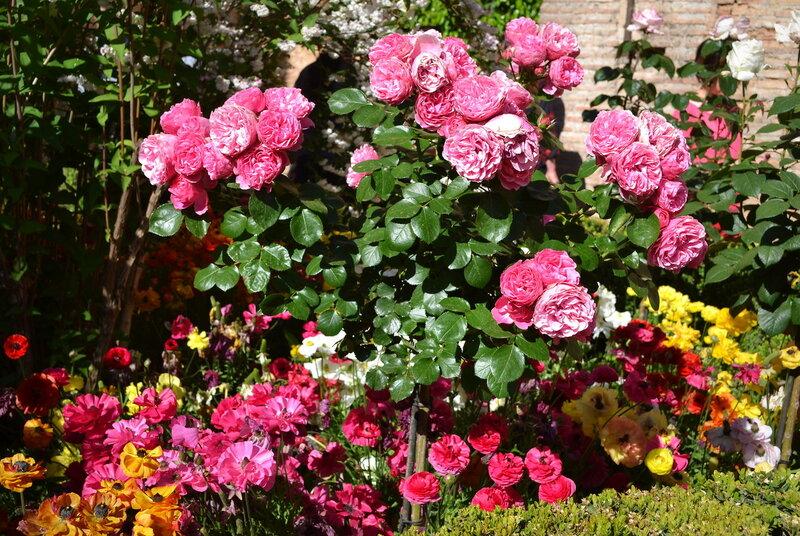 Розы и лютики