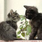 Рудуду и Рикики