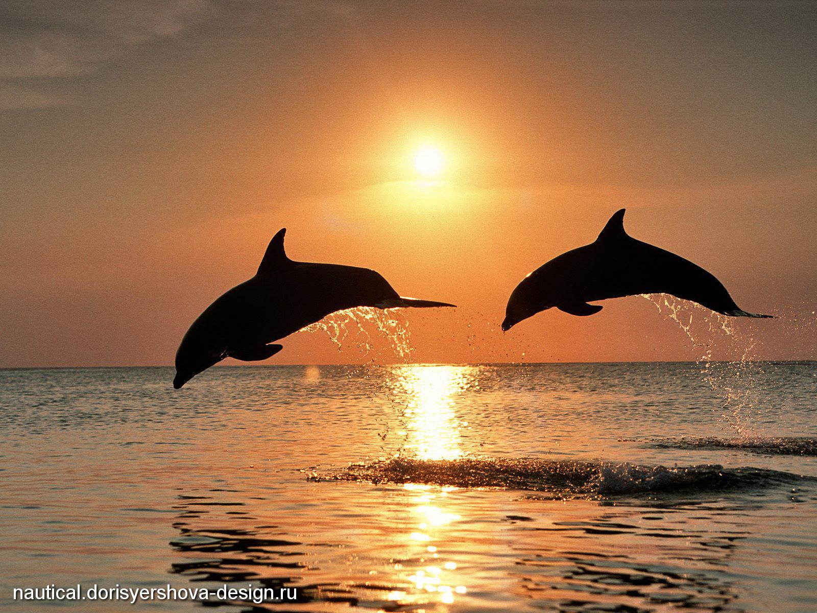 дельфины, закат солнца