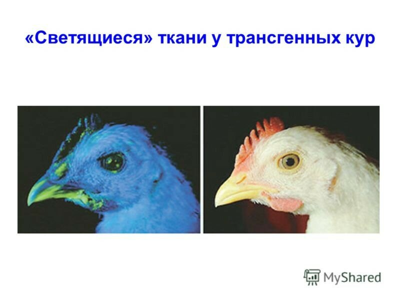 https://img-fotki.yandex.ru/get/237726/158289418.416/0_17a272_544cd585_XL.jpg