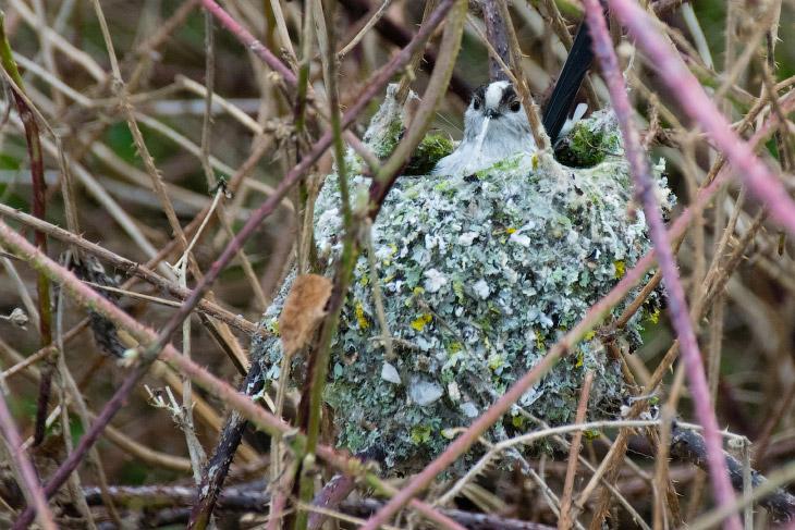 2. Зимородок — красивая птица немного крупнее воробья. За рыбой охотится с воздуха. Способен взлетат