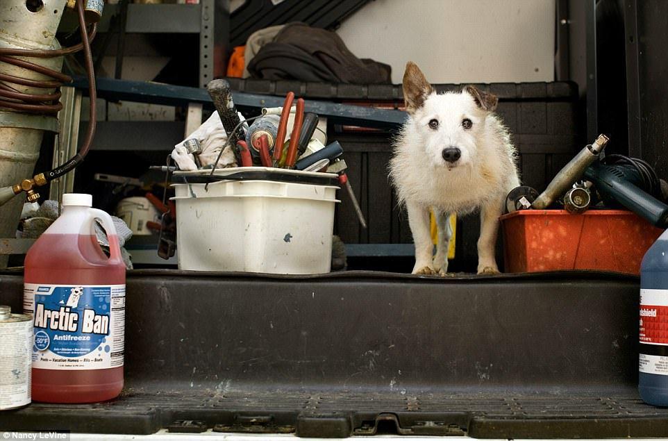 Трогательные фотографии собак, доживших до глубокой старости