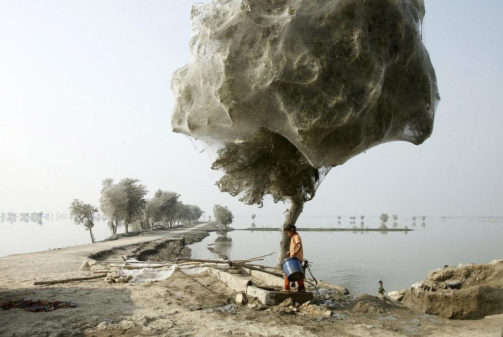 22. Ну очень необычный ствол дерева в Гуанси, Китай. Как паутина.