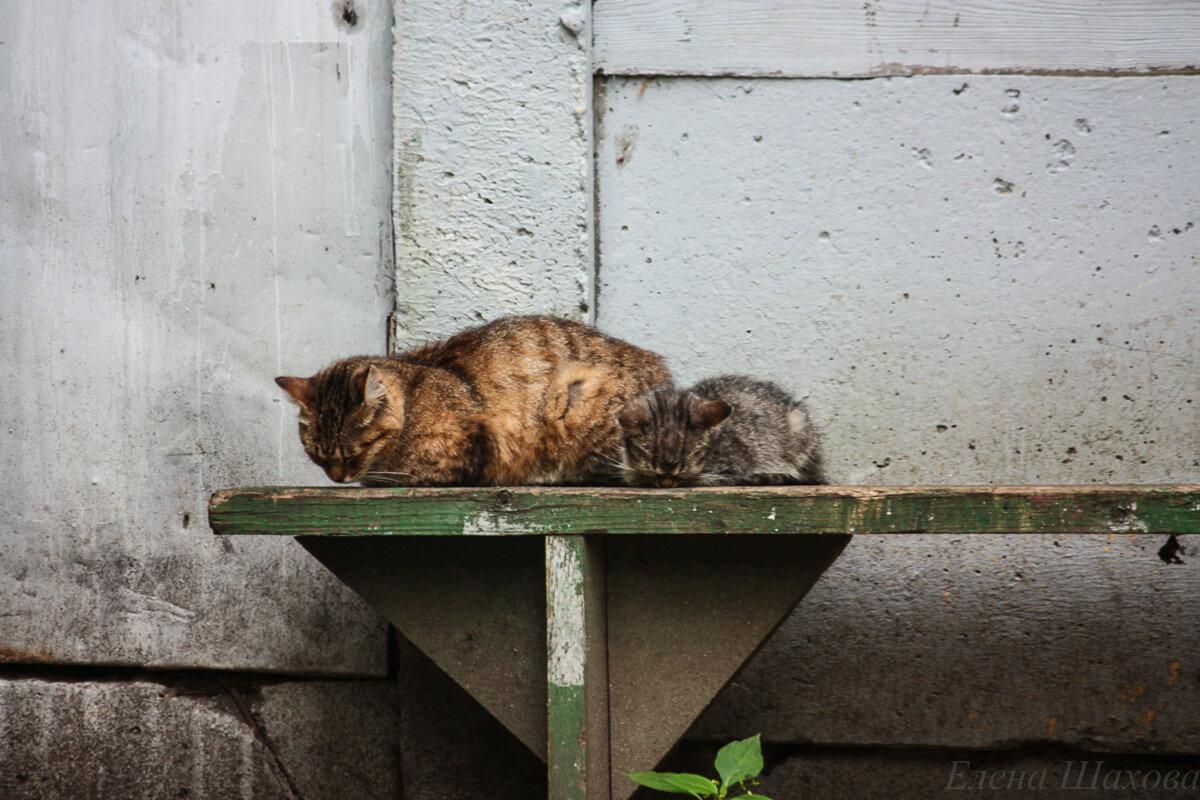 Котики.jpg