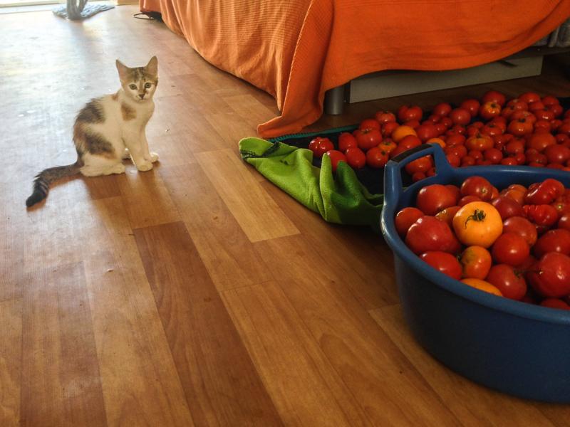 Черепашка и помидоры