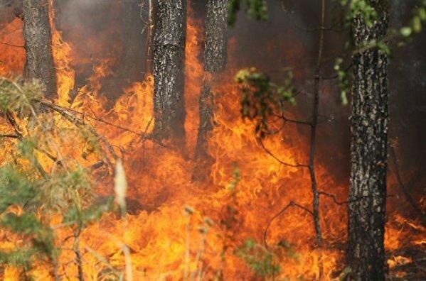 Хорватия, пожары, стихийные бедствия