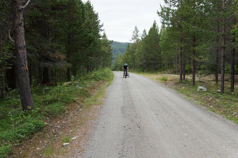 начало старой почтовой дороги Альта - Каутокейно по сосновому лесу