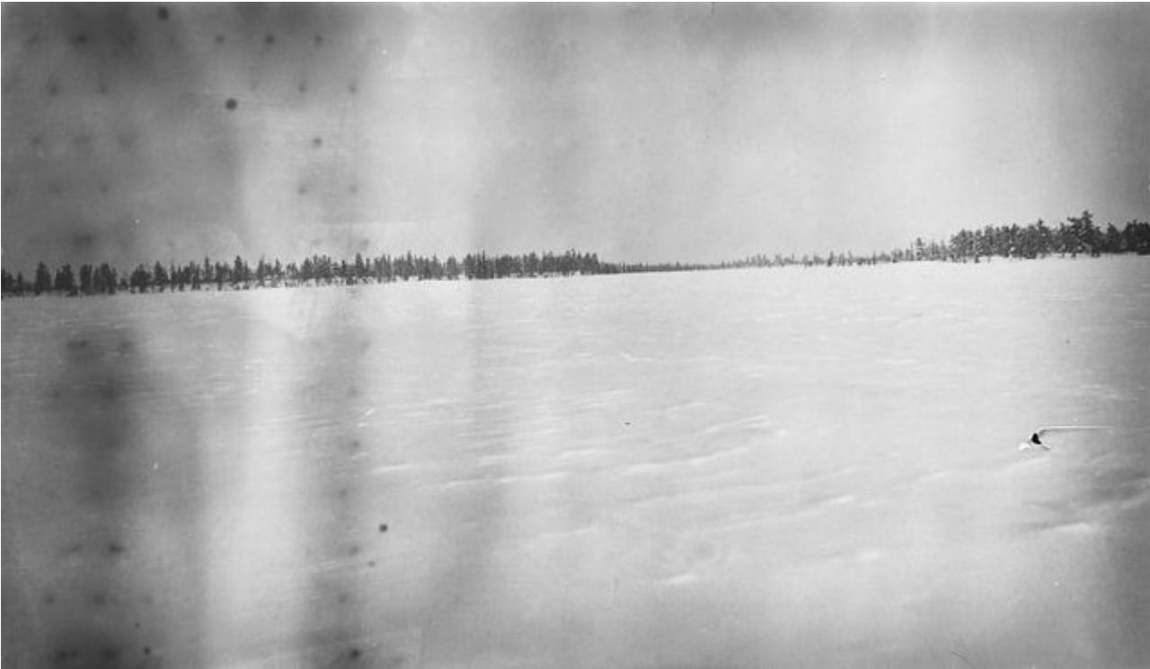 162. Арктическая тундра
