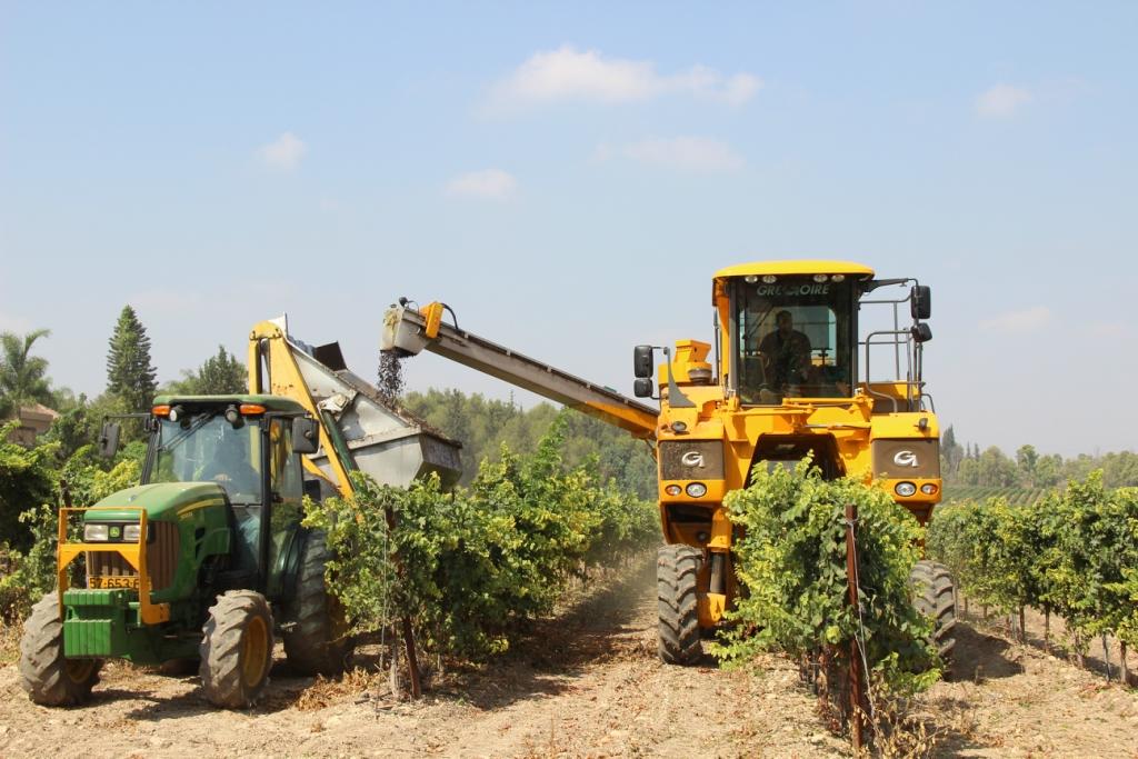 Сбор урожая винограда на винодельне Баркан