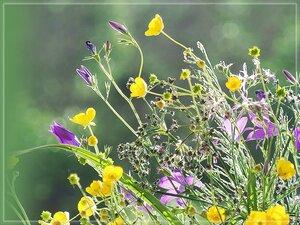 Луговые цветики