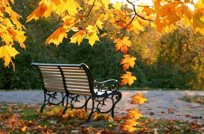 Открытки. Осень. Скамейуа в парке открытки фото рисунки картинки поздравления