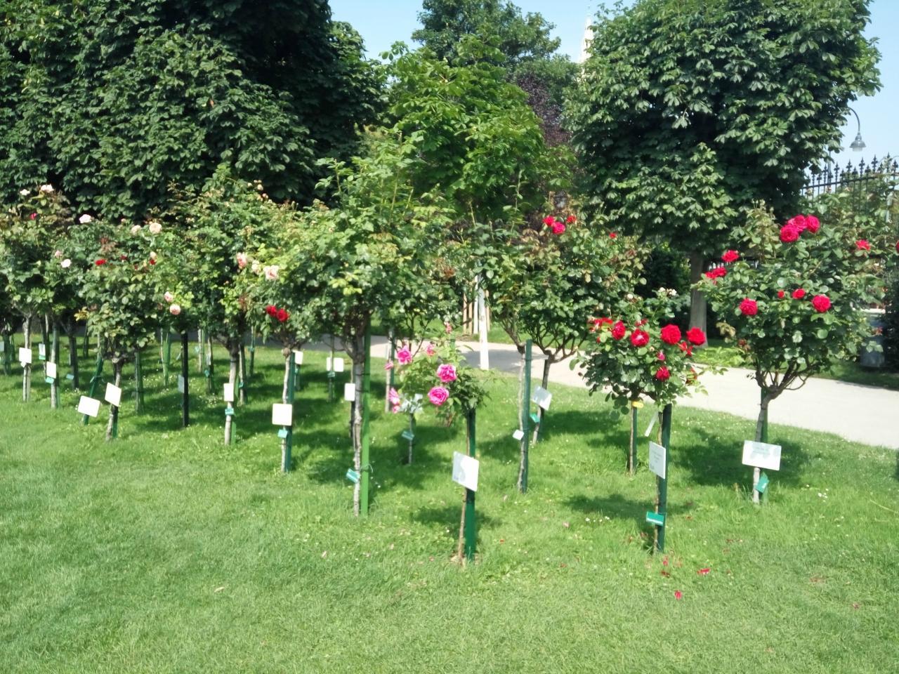 Maroosya Народный сад