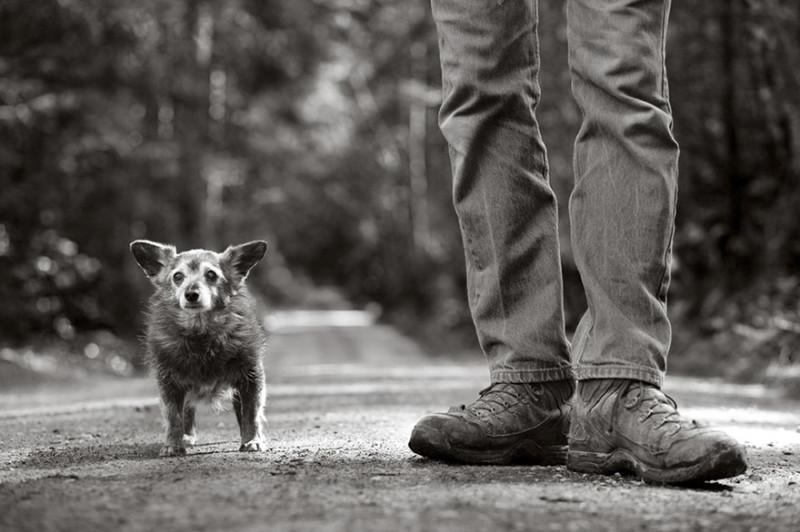 Фотограф делает снимки собак преклонного возраста (16 фото)