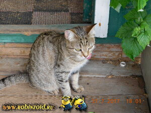 соседская кошка
