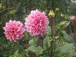 клумбы, цветы