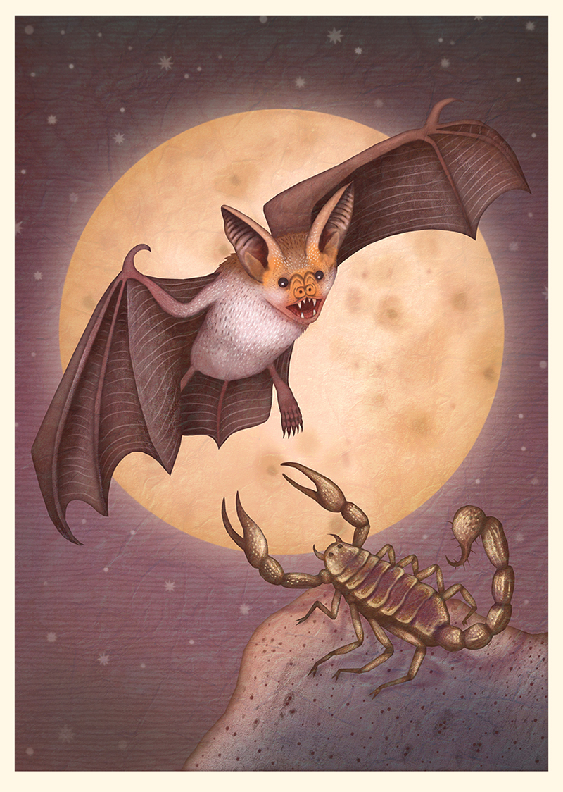 A Collection of Bat Illustrations by VLAD Stankovic