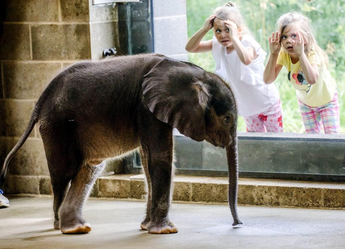 Девчушки и зверюшки!: А ваш слоник сегодня выйдет погулять?