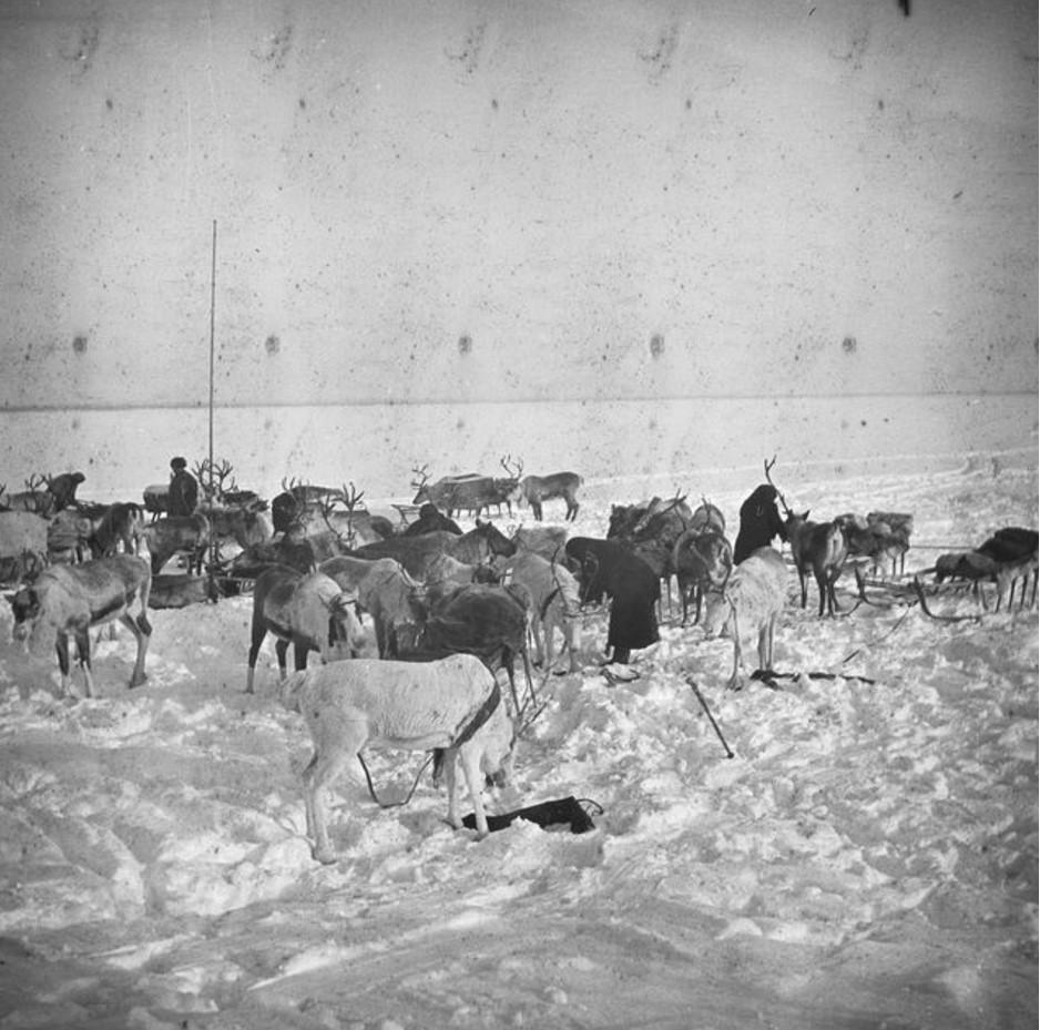 165. Олени и сани в снегу