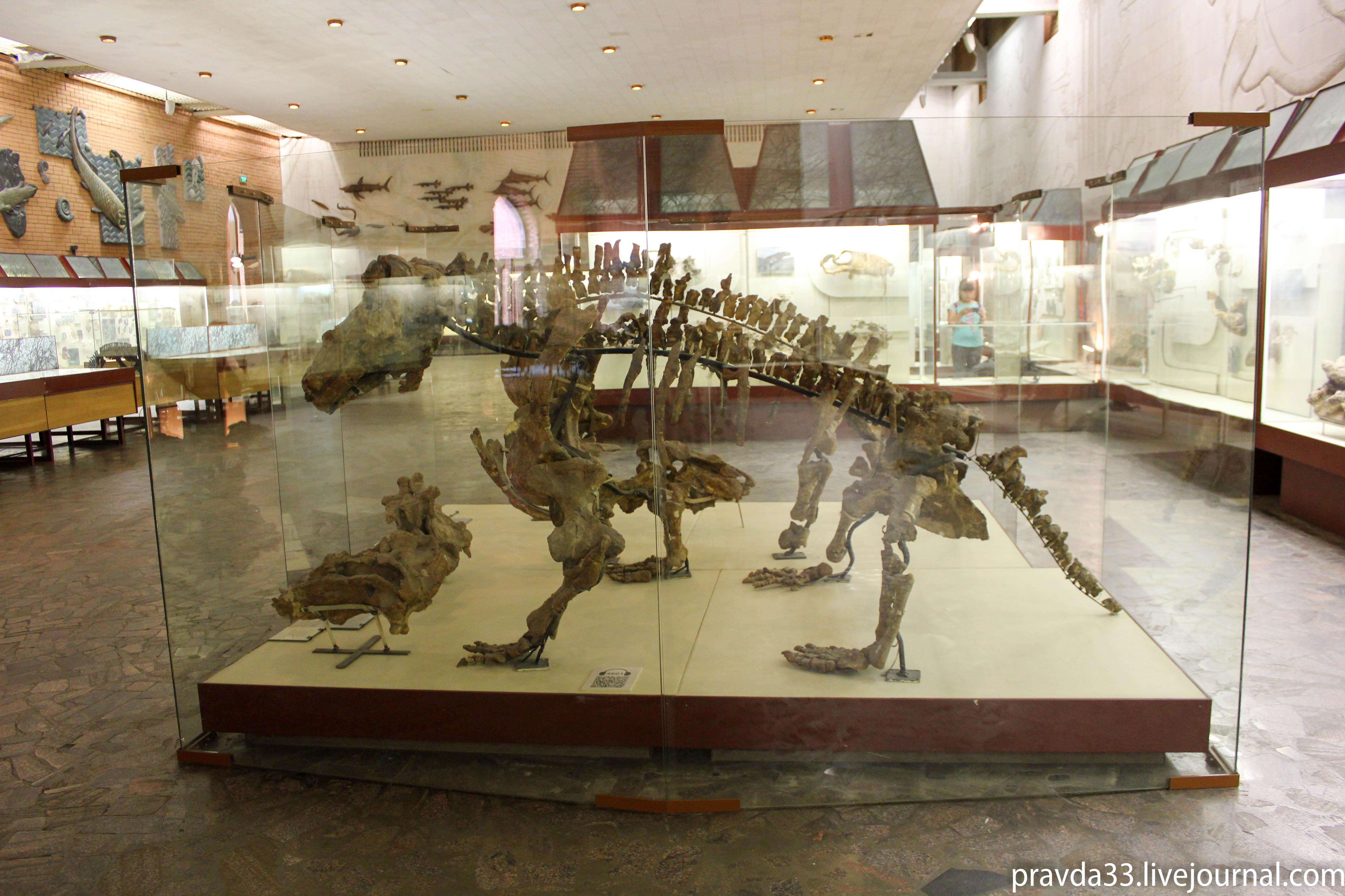 Музей палеонтологии-23.jpg