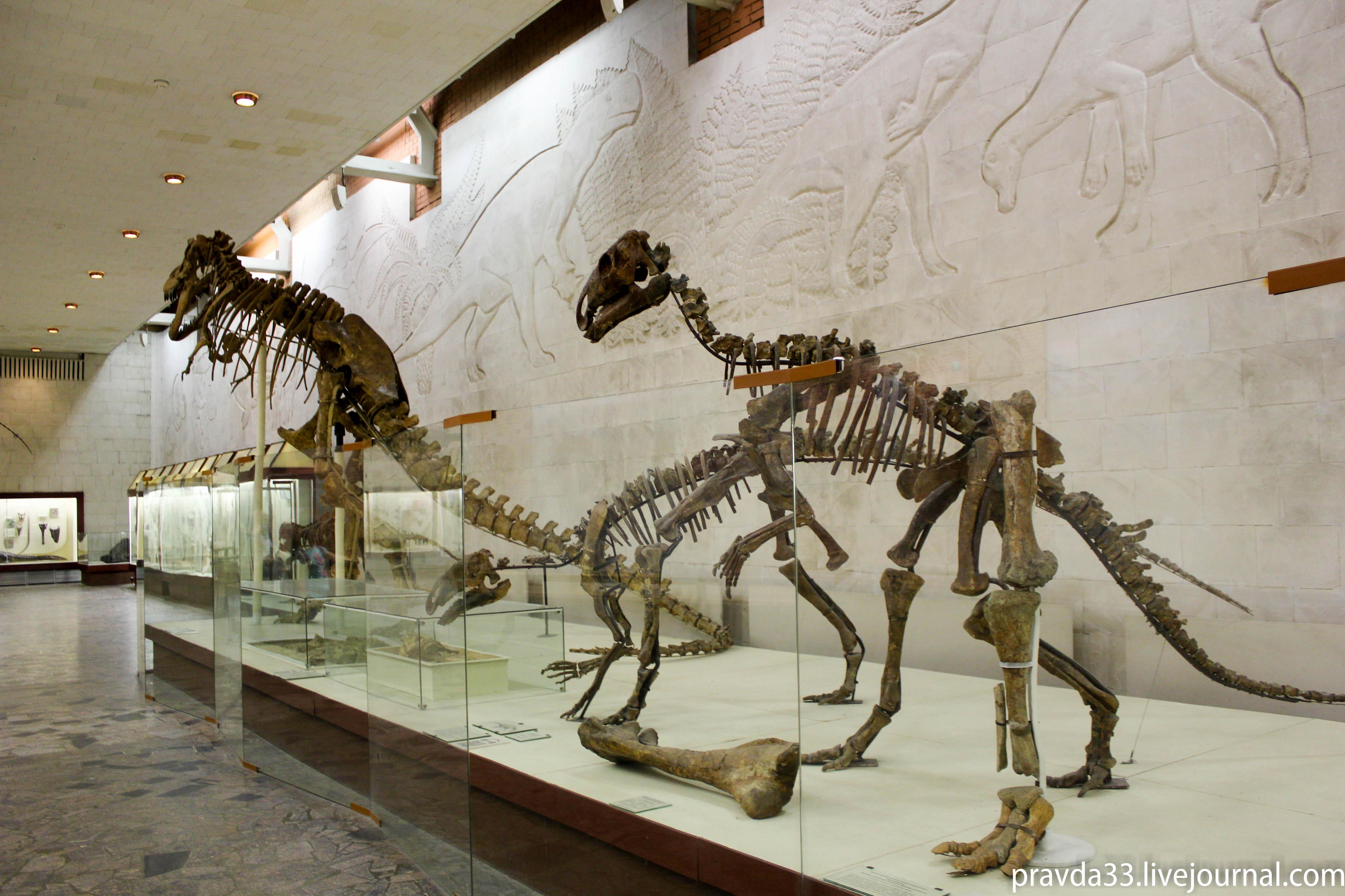 Музей палеонтологии-45.jpg
