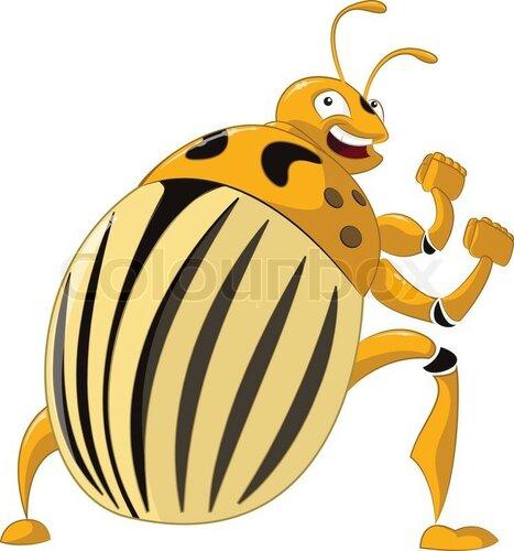 8843421-colorado-potato-beetle.jpg