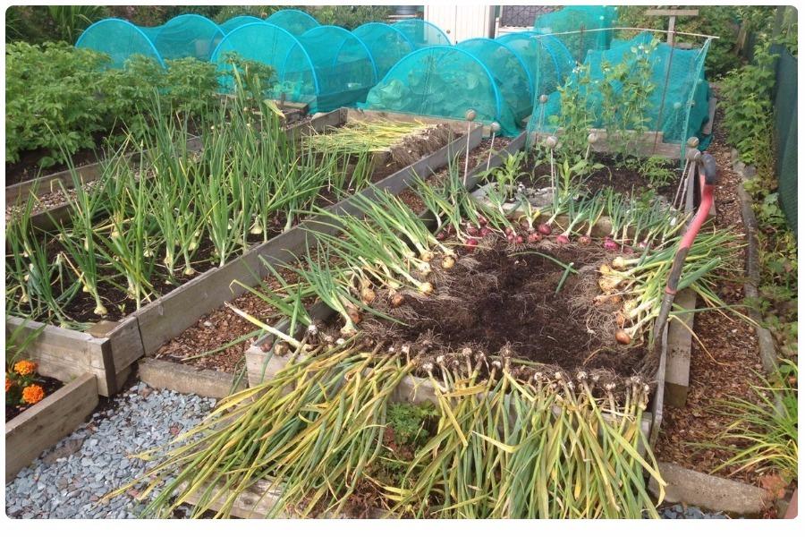 Защита огорода от летающих насекомых вредителей сеткой: 10 плюсов