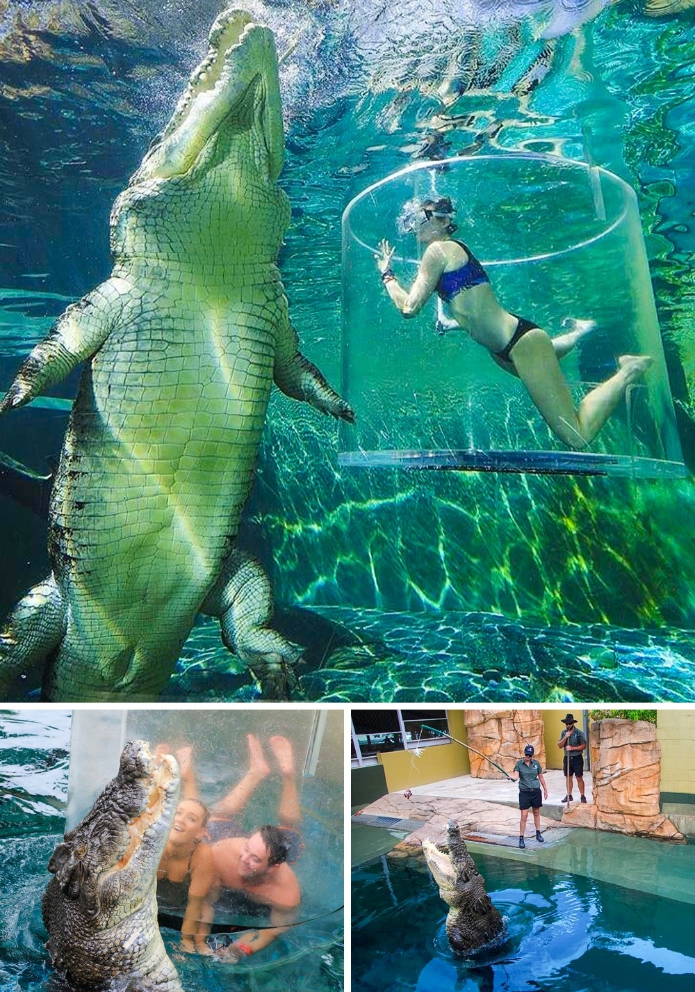 © Crocosaurus Cove Darwin/Facebook   © Crocosaurus Cove Darwin/Facebook   © Crocosaurus Co