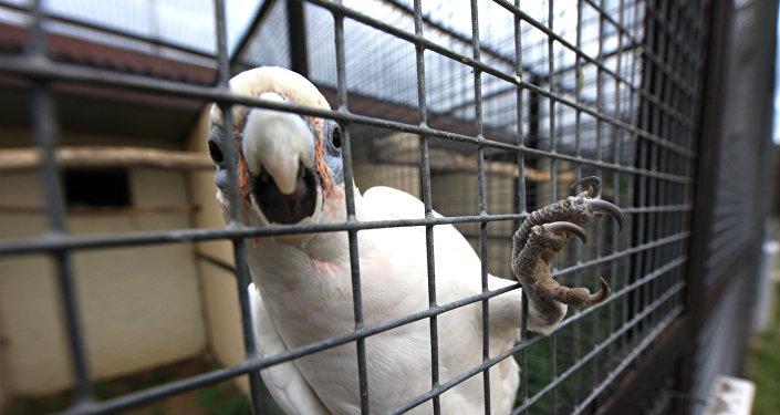 Японские фермеры посадили пони надетский стульчик инакормили морковкой