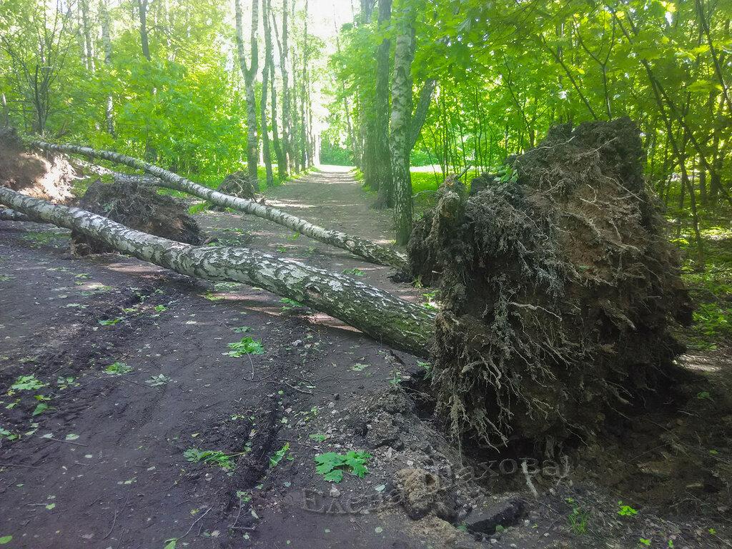 Тимирязевский парк-36 copy.jpg