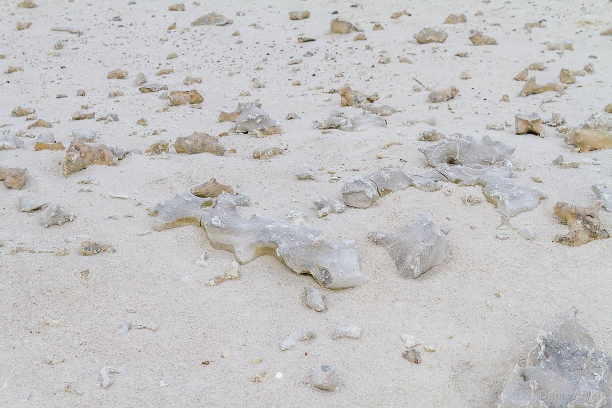 камышинский песчаный карьер фото 5