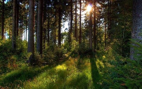 Лес - помощник