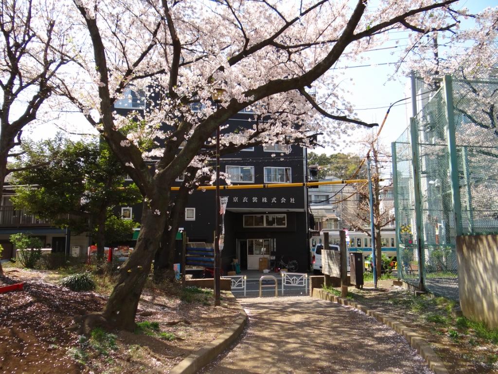 Сакура-ханами в токийском парке Йойоги