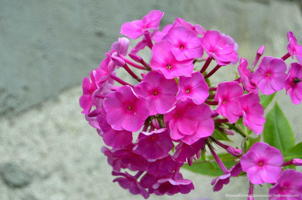 Утренние цветы