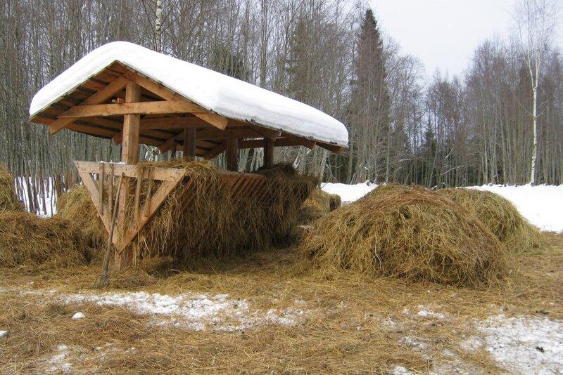 Кормушка с сеном, оленья ферма, Селигер