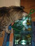 Где моя золотая рыбка...