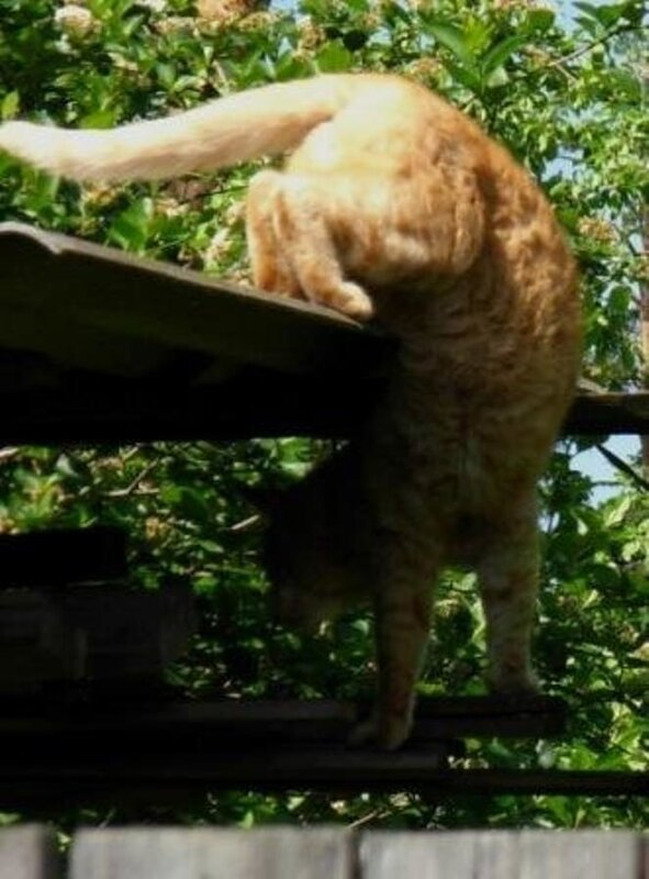 Кошачья акробатика