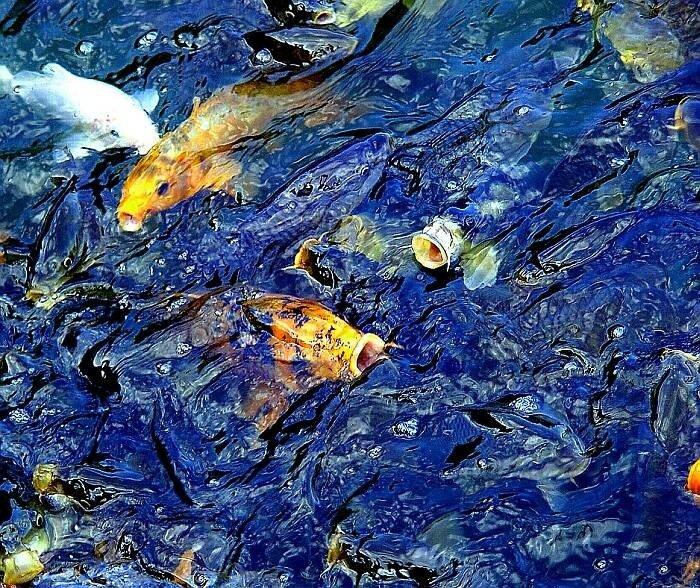 Рыбы 08