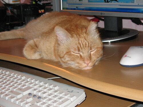 Кот Кеша и компьютер