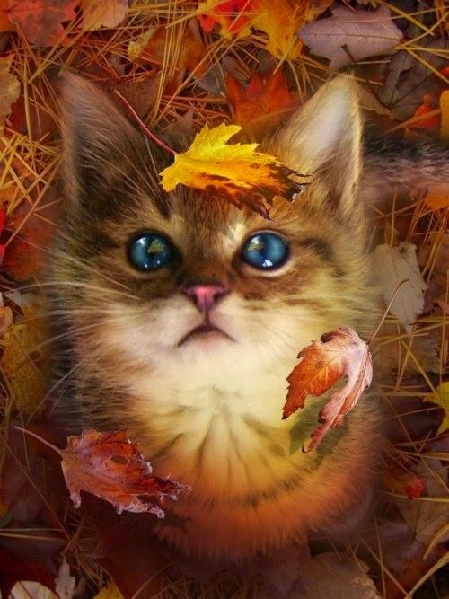 Открытки. Котенок наблюдает как падает листва