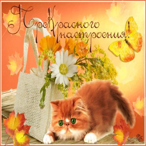 Прекрасного настроения! Осенний котенок открытки фото рисунки картинки поздравления